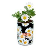 Композиции из живых цветов -маргаритка фото