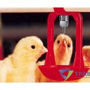 Поилки ниппельные для птицефабрик фото