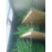 Зелёный лук перо фото