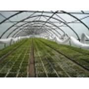 Грибница, зимний сад, зимний огород фото