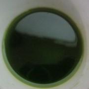 Конопляное масло. 250 мл. фото