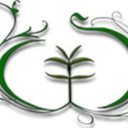 Сидерати (зелені добрива), фото