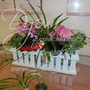Комнатные растения для интерьера. фото