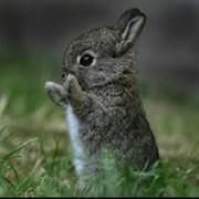 Комбікорм для кролів з люцерною тм Мультигейн фото