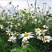 Травы лекарственные фото