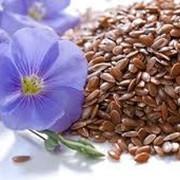 Семена льна масленичного фото