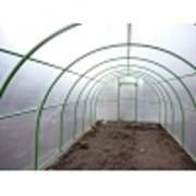 Зимний огород, грибница, оранжерея фото
