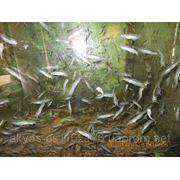 Рыбоводная ферма УЗВ и СОВ фото