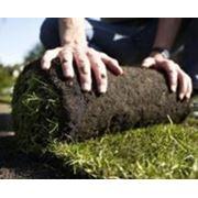 Укладка рулонных газонов фото