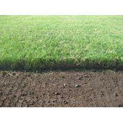 Рулонный газон Спортивный фото