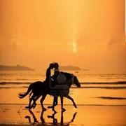 Верховая езда Киевская область фотография