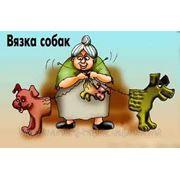 Профессиональный инструктор по вязке собак. фото