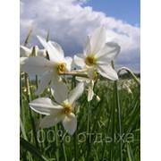 Цветущее Закарпатье 07.05 — 09.05., 13.05 — 15.05. фото