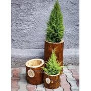 Горшок из дерева Сampflower Сосна фото