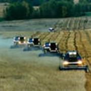 Услуги по уборке зерновыми комбайнами фото
