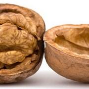 Орехи грецкие, закупка, переработка, продажа фото