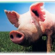 Жир свиной, говяжий, костный фото