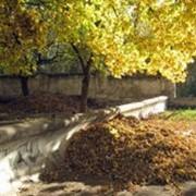 Вывоз опалых листьев, травы, веток фото