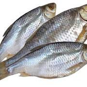 Рыба сушеная, Снеки фото