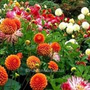Устройство цветников и клумб №23 фото