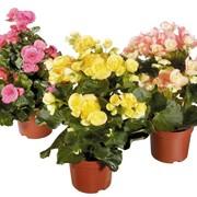 Цветы для дома и офиса фото