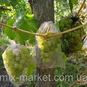 Защитная сетка для кистей винограда (5 кг) фото