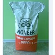 Семена подсолнечника Пионер (классические) А90, А91, Ф66, Ф50 фото