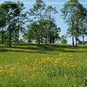 Производственный экологический контроль. Консультационные услуги в области природоохранного законодательства и согласовательных процедур. фото