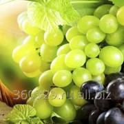 Виноград Тукай фото