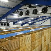 Овощехранилища, Технологическое оборудование для заморозки и хранения различных видов продукции, Холодильные или морозильные камеры. фото