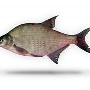 Рыба свежемороженая, Лещ средний (мороженая), Опт, Экспорт фото