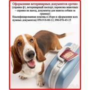 Оформление ветеринарных,разрешительных документоФ1 фото
