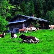 Продается землевладение-усадьба на участке 15 га фото
