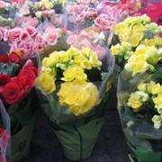 Цветущие растения в горшках фото
