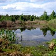 Супер земля в лесу с собственным озером на участке. фото