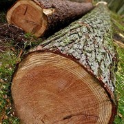 Лесоводство и лесозаготовки фото