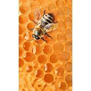 Продажа мёда оптом и в розницу фото