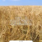 Отруби зерновые фото