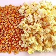 Зерно для попкорна фото