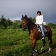 Катание на лошадях, ПОНИ фото