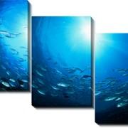 Модульная картина Косяк рыб, Неизвестен фото