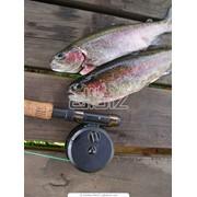Ящик для рыболовных приманок фото