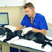 Ветеринарные услуги фото