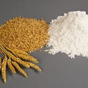 Мука пшеничная из Казахстана фото