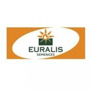 Петуния семена подсолнечник Евралис фото