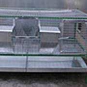 """Клетка для кроликов откормочная """"Любимая"""" фото"""