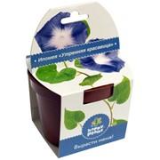 Ипомея Happy Plant наборы для выращивания фото