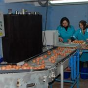 Курятина, готовые изделия яйца куринные фото