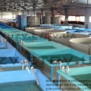 Установка оборудования рыбных ферм УЗВ фото
