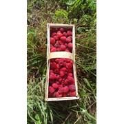 Малина ягода свежая фото